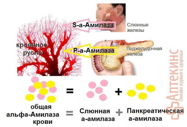 Альфа амилаза